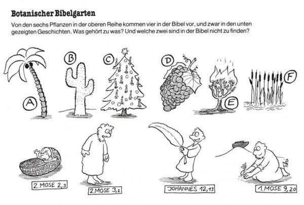 Botanischer Bibelgarten